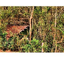 """""""Shed in the Sticks""""... prints and products Photographic Print"""