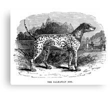 Vintage Dalmatian Dog Illustration Retro 1800s Black and White Image Metal Print