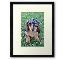 Adorable Puppy Framed Print
