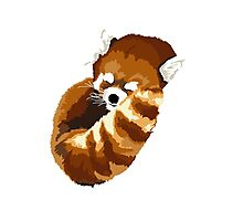 Muscle Zoo Red Panda Photographic Print