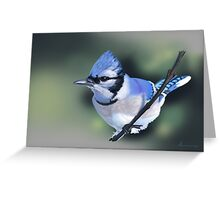Blue Jay 02 Greeting Card