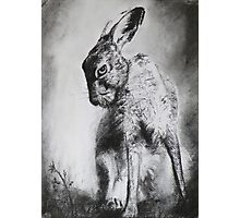 Charcoal Hare Photographic Print