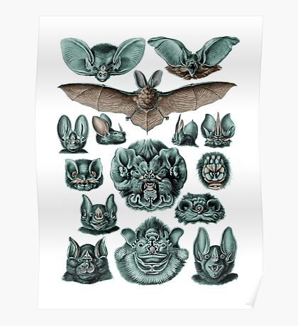 Chiroptera Bats in Turquoise Poster