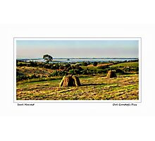 Saul Harvest Photographic Print