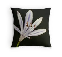 One Agapanthus flower Throw Pillow