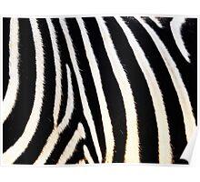Zebra fur pattern  Poster