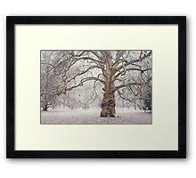 Platan Tree in Early Winter Framed Print