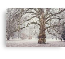 Platan Tree in Early Winter Canvas Print