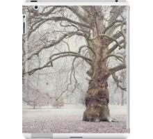 Platan Tree in Early Winter iPad Case/Skin