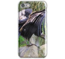 Female Andean Condor on a Rock iPhone Case/Skin