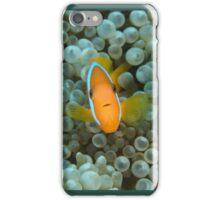 Black Anemonefish - Amphiprion melanopus iPhone Case/Skin