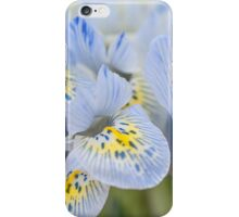 Bunch of Blue Mini Irises  iPhone Case/Skin