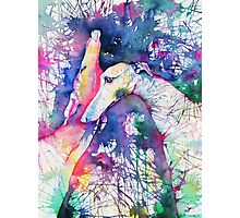 Greyhound Trance Photographic Print