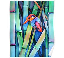 Black-backed Kingfisher on Bamboo Poster