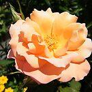 Flower Close-Up, West Street Garden, Lower Manhattan, New York City  by lenspiro