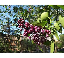Jersey City, New Jersey, Flower Close-Up Photographic Print