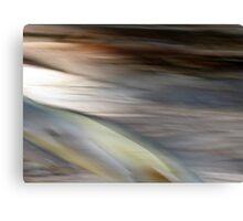 Eucalyptus #1 Canvas Print