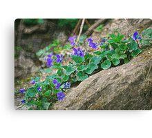 Sparkle Violets Canvas Print