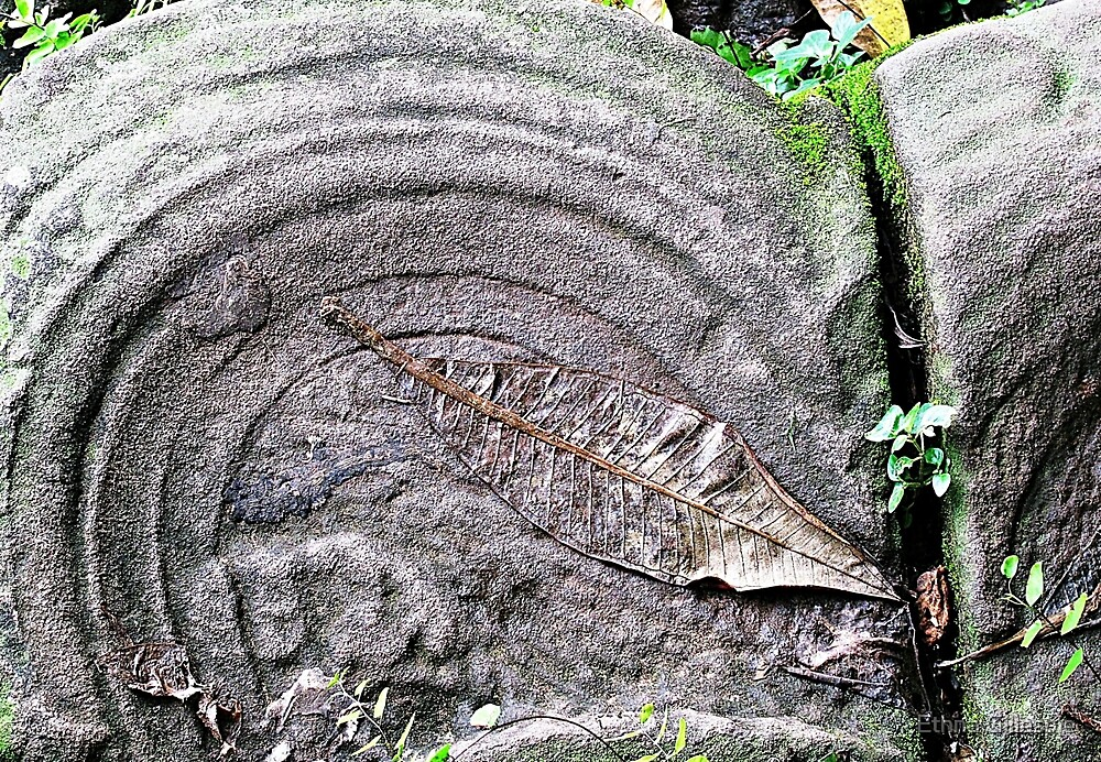 Leaf on a Stone  by Ethna Gillespie