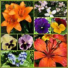 Orange Sparkle - Collage featuring Orange Lilies by BlueMoonRose