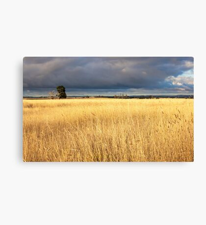 Grassy field in the Australian countryside. Canvas Print