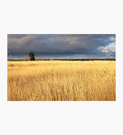 Grassy field in the Australian countryside. Photographic Print