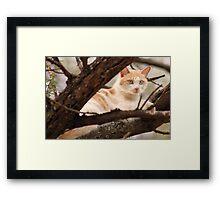 """GINGER AND HIS """"SUNSHINE"""" SPOT Framed Print"""