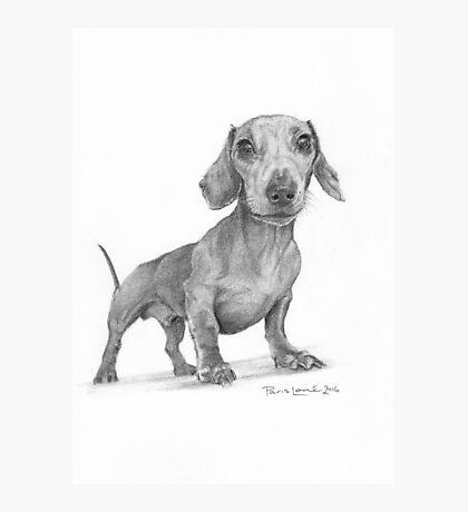 Max the Dog Photographic Print