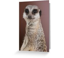 meerkats look at me Greeting Card