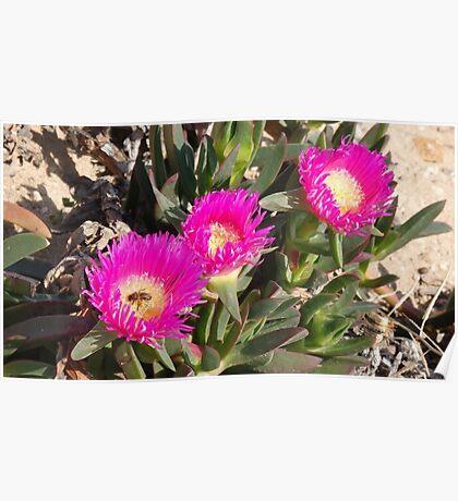 Dune Flowers Poster