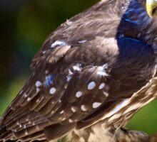 Barking Owl Sticker
