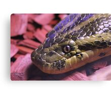 Yellow Anaconda snake laying in red woodchips Canvas Print