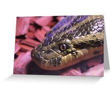 Yellow Anaconda snake laying in red woodchips Greeting Card