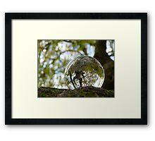 A tree seen through the glass ball Framed Print