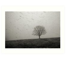 Lone Tree and Snowstorm Art Print