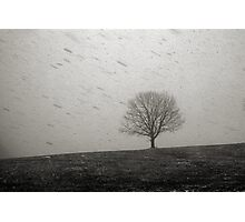 Lone Tree and Snowstorm Photographic Print