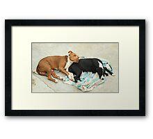 Dogs Sleeping Framed Print
