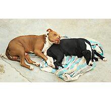 Dogs Sleeping Photographic Print