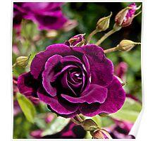 Lascivious Rose Poster