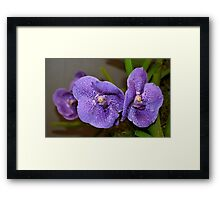 Small Purple Orchids Framed Print