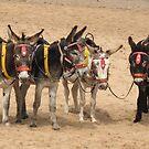 British Beach Donkeys by KMorral