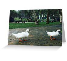 duck, da hu park  Greeting Card