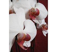 Orchid collection Photographic Print