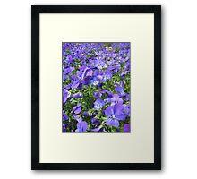 Violet Sea Framed Print