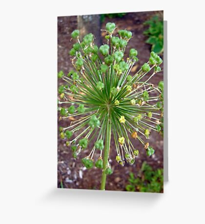 Green Ball Greeting Card