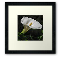 Arum lily Framed Print