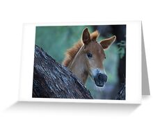 Curious One Greeting Card