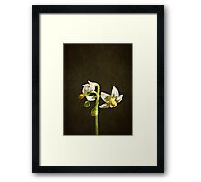 NS Mini White Bloom© Framed Print