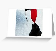 A touch of red Greeting Card