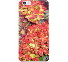 Autumn Hydrangeas, in russet colours iPhone Case/Skin
